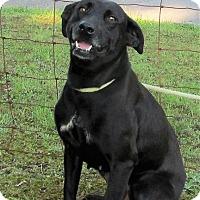 Adopt A Pet :: Lennon - Elmwood Park, NJ