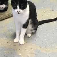 Adopt A Pet :: Buddy - Brooksville, FL
