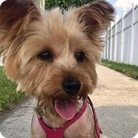 Adopt A Pet :: Zoey - Long Beach, NY