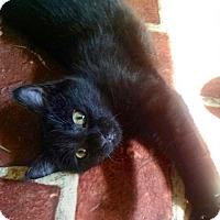 Adopt A Pet :: JoJo - Lambertville, NJ