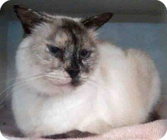 Domestic Shorthair Cat for adoption in Gahanna, Ohio - ADOPTED!!!   Emily