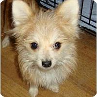Adopt A Pet :: PUPPY... Goliath - Leesport, PA