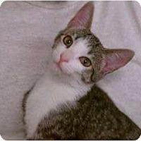 Adopt A Pet :: Tulip - Greenville, SC
