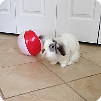 Adopt A Pet :: Lilly - Portland, ME