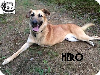 Shepherd (Unknown Type) Mix Dog for adoption in Huntsville, Ontario - Hero - Adopted Sept 2016