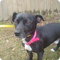 Adopt A Pet :: Benito - Clackamas, OR