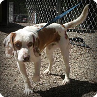 Adopt A Pet :: Rugby - Muskegon, MI