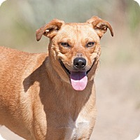 Adopt A Pet :: Trona - Washoe Valley, NV