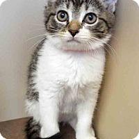 Adopt A Pet :: ADOPTED!!!   Raya - Oswego, IL