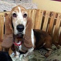 Adopt A Pet :: KATIE - Pennsville, NJ