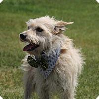 Adopt A Pet :: Cal - Carrollton, TX