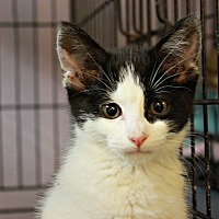 Adopt A Pet :: Tika - New Richmond,, WI