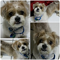 Adopt A Pet :: Ragamuffin - Forked River, NJ