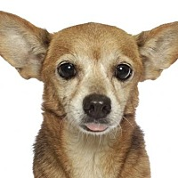 Adopt A Pet :: Rito - oakland park, FL