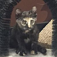 Adopt A Pet :: STARINA - Brea, CA
