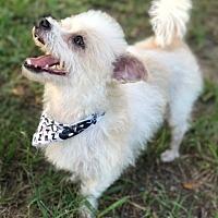 Adopt A Pet :: BENNIE - Boston, MA