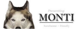 Husky Dog for adoption in Colmar, Pennsylvania - Monti