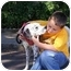 Photo 2 - Dalmatian Mix Dog for adoption in Claymont, Delaware - Archie