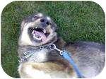 German Shepherd Dog/Golden Retriever Mix Dog for adoption in Apple valley, California - BubbaBear