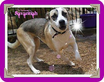 Shepherd (Unknown Type)/Shepherd (Unknown Type) Mix Puppy for adoption in Perris, California - Savannah