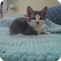 Adopt A Pet :: Gwen - Modesto, CA