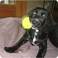 Adopt A Pet :: Cooper - North Jackson, OH