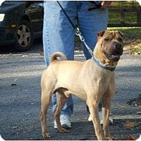 Adopt A Pet :: Homes Wanted! - Bethesda, MD