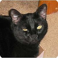 Adopt A Pet :: Sophia - lake elsinore, CA