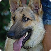 Adopt A Pet :: Teddy - Altadena, CA