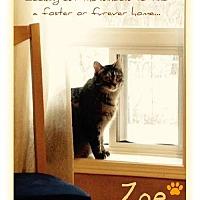 Domestic Shorthair Cat for adoption in Blackstock, Ontario - Zoe