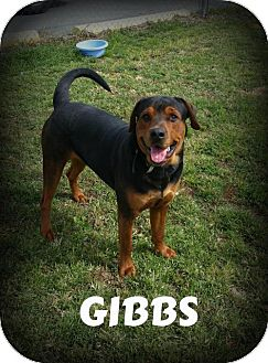 Rottweiler Mix Dog for adoption in Greenville, Kentucky - GIBBS