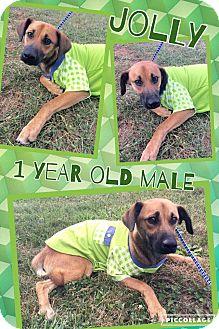 Shepherd (Unknown Type) Mix Dog for adoption in Lexington, North Carolina - JOLLY