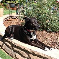 Adopt A Pet :: Knight - Alpharetta, GA