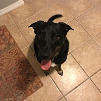Adopt A Pet :: DIESEL - BROOKSVILLE, FL