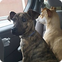 Adopt A Pet :: Leather - Blue Bell, PA