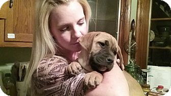Mastiff Mix Puppy for adoption in Winchester, Virginia - Cassie
