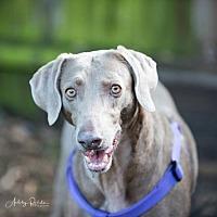 Adopt A Pet :: Maren - Birmingham, AL