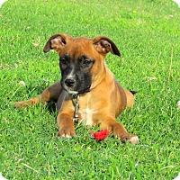 Adopt A Pet :: FLAIR - Bedminster, NJ