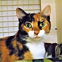 Adopt A Pet :: Janice - Naples, FL