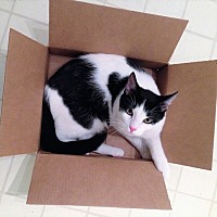Adopt A Pet :: Max - Vancouver, BC