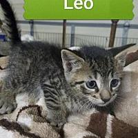 Adopt A Pet :: Leo - Rochester, NY