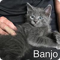 Adopt A Pet :: Banjo - Naugatuck, CT