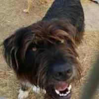 Adopt A Pet :: Jasmine - justin, TX