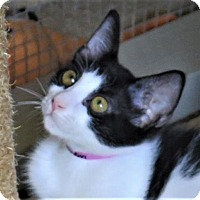 Adopt A Pet :: Madisyn - Gonzales, TX