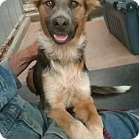 Adopt A Pet :: BINGO - Gustine, CA
