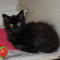 Adopt A Pet :: Birdie - Brainardsville, NY