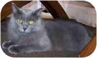 Domestic Longhair Cat for adoption in Sheboygan, Wisconsin - Graham
