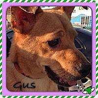 Adopt A Pet :: Gus - Los Angeles, CA