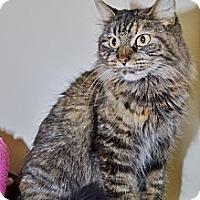 Adopt A Pet :: Aja - North St. Paul, MN