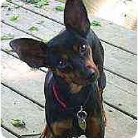 Adopt A Pet :: Becky - Swiftwater, PA